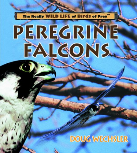 Peregrine Falcons (Really Wild Life of Birds of Prey): Doug Wechsler