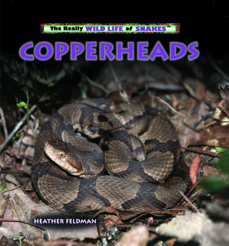 9780823967216: Copperheads (The Really Wild Life of Snakes)