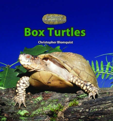 9780823967353: Box Turtles (The Library of Turtles and Tortoises)