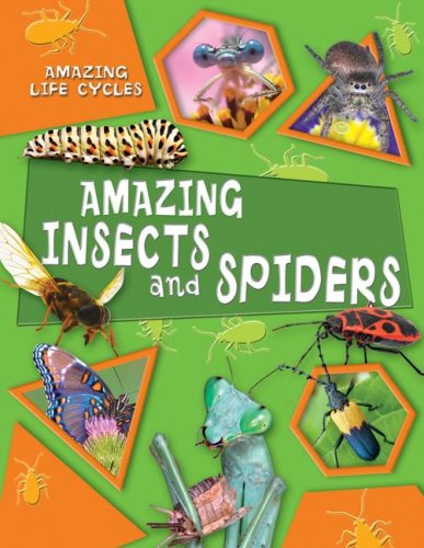 9780836888997: Amazing Insects and Spiders (Amazing Life Cycles)