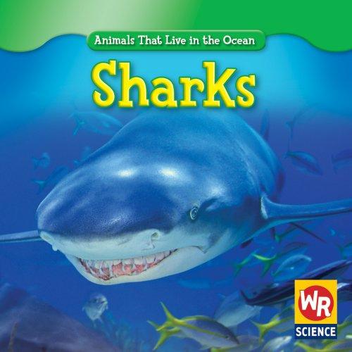 Sharks (Animals That Live in the Ocean): Weber, Valerie J.