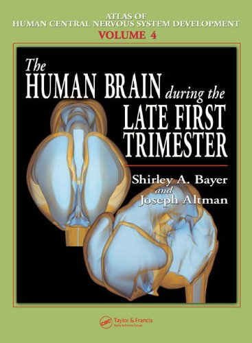 The Human Brain During the Late First Trimester: Altman, Joseph; Bayer, Shirley A.