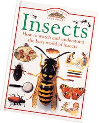 9780851668734: Insects (Explorer guides)