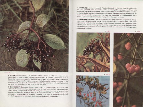 9780853065975: Wild Fruits and Berries (Cotman-color)