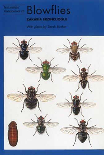 9780855463038: Blowflies (Naturalists' Handbooks)