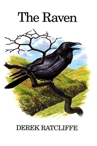 The Raven A Natural History in Britain and Ireland