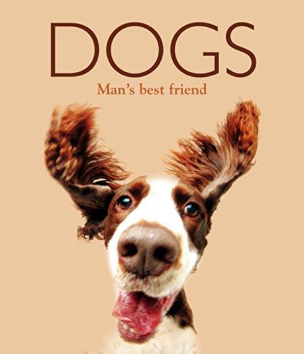 9780857348074: Dogs (Focus on Midi 2)