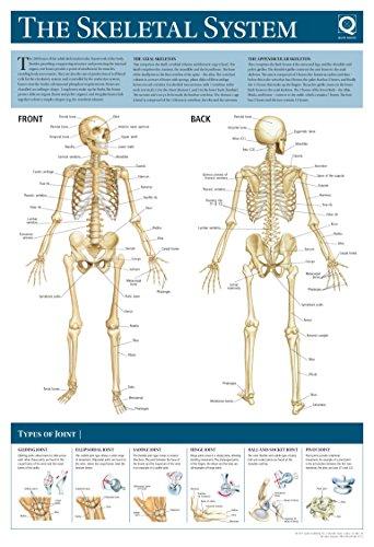 Human Anatomy Wallchart - The Skeletal System