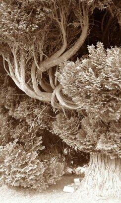 9780863155185: Rudolf Steiner: A Scientist of the Invisible