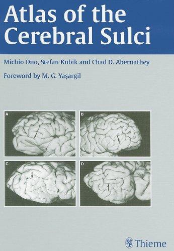 9780865773622: Atlas of the Cerebral Sulci