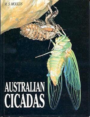 9780868401393: Australian Cicadas