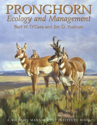 9780870817571: Pronghorn: Ecology & Mangemt: Ecology and Management