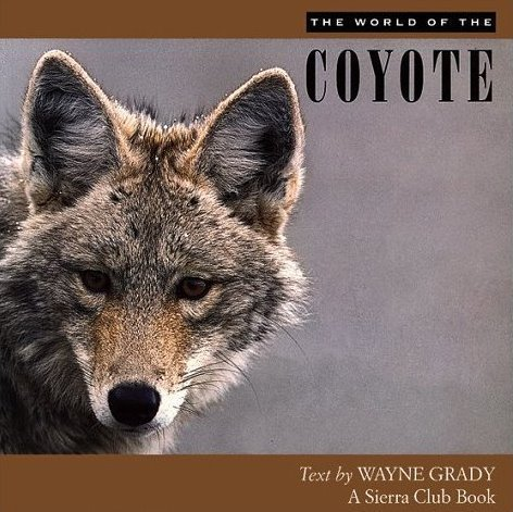 THE WORLD OF THE COYOTE: Wayne Grady
