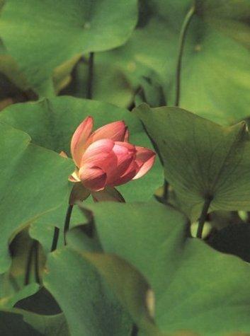 9780873281553: The Botanical Gardens at the Huntington
