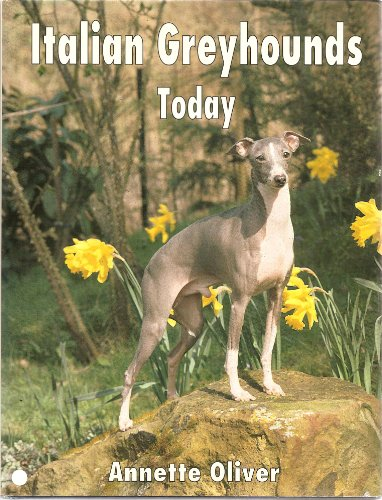 Italian Greyhounds Today: Oliver, Annette