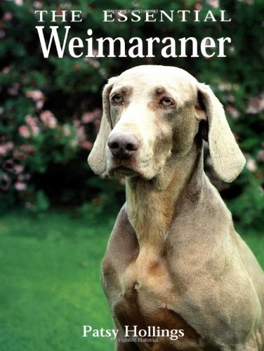 9780876053645: The Essential Weimaraner