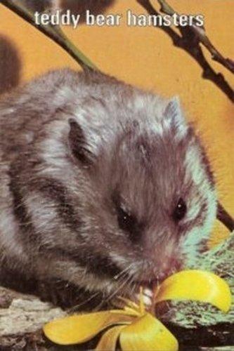 9780876667767: Teddy Bear Hamsters