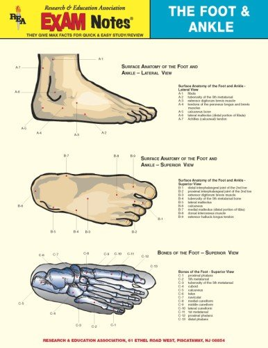 9780878912377: Foot & Ankle Anatomy EXAM Notes (EXAM Notes Reference Charts)