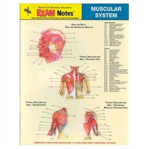 EXAMNotes for Muscular System (EXAMNotes): The Editors of REA