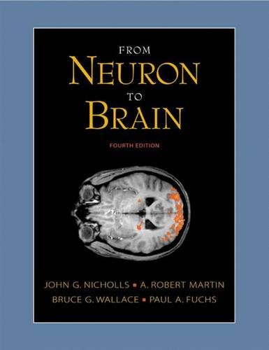 9780878934393: From Neuron to Brain: A Cellular and Molecular Approach to the Function of the Nervous System, Fourth Edition