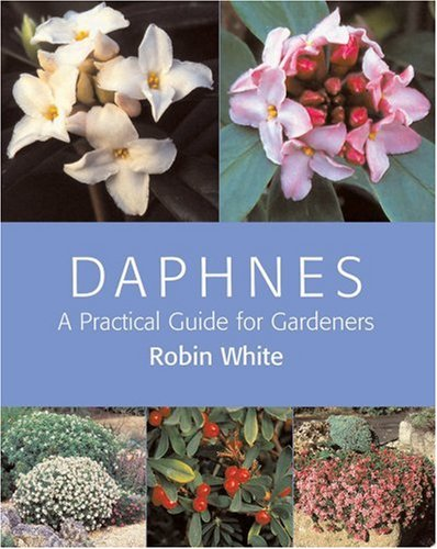 Daphnes: A Practical Guide for Gardeners: White, Robin