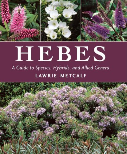 Hebes A Guide to Species Hybrids and Allied Genera