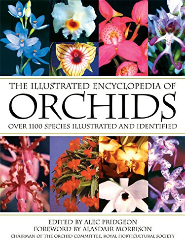 9780881928013: The Illustrated Encyclopedia of Orchids
