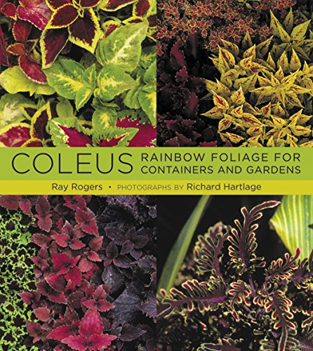 Coleus: Rainbow Foliage for Containers and Gardens: Rogers, Ray