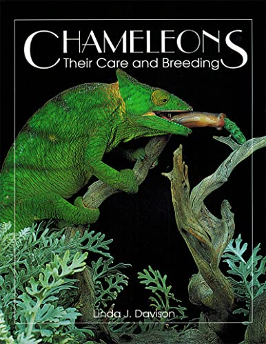 9780888393531: Chameleons: Their Care and Breeding