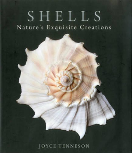 9780892729760: Shells: Nature's Exquisite Creations