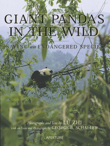 Giant Pandas in the Wild Saving an Endangered Species