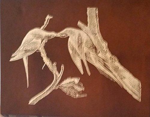 Audubon's Birds of America (The Audubon Society: John James Audubon