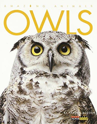 Owls (Amazing Animals): Bodden, Valerie