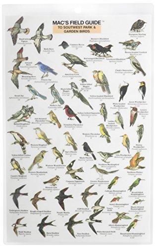 Mac's Field Guide to Southwest Park/Garden Birds: Craig MacGowan