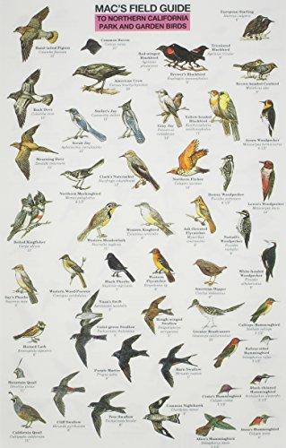Mac's Field Guide Northern California Park &: Craig MacGowan