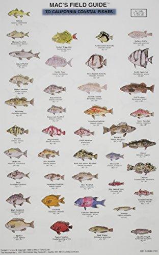 Mac's Field Guides: California Coastal Fish (0898865700) by Craig MacGowan