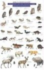 9780898865950: Mac's Field Guide to Mount Rainier National Park: Mammals and Birds (Mac's Guides (Paperback))