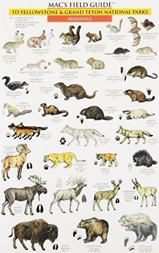 Mac's Field Guide to Yellowstone & Grand: MacGowan, Craig; MacGowan,