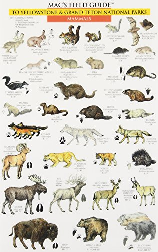 Mac's Field Guide to Yellowstone & Grand Teton National Parks: Birds &  Mammals (0898866723) by Craig MacGowan; MacGowan, Craig