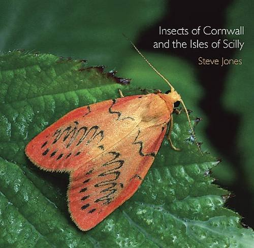 Insects of Cornwall and the Isles of Scilly (Pocket Cornwall): Jones, Steve
