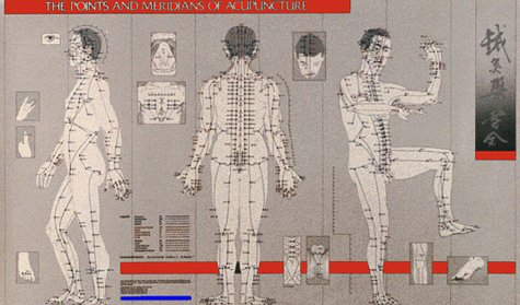 9780912111407: Points and Meridians of Acupuncture Chart (Paradigm title)