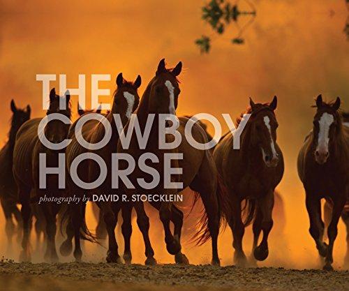 9780922029310: Cowboy Horse