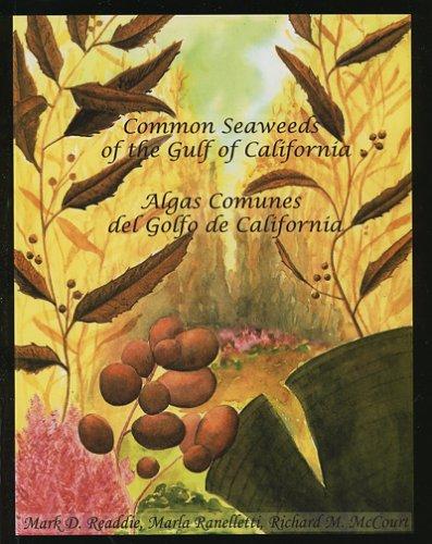 Common Seaweeds of the Gulf of California