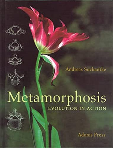 Metamorphosis: Evolution in Action: Suchantke, Andreas