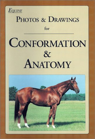 Equine Photos & Drawings for Conformation & Anatomy: Juliet Hedge