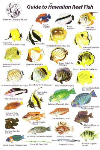 9780939560042: Guide to Hawaiian Reef Fish