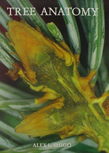 Tree Anatomy [Jan 01, 1994] Shigo, Alex