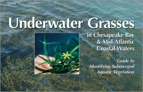 9780943676647: Underwater Grasses in Chesapeake Bay & Mid-Atlantic Coastal Waters: Guide to Identifying Submerged Aquatic Vegetation