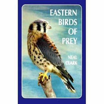 9780945980278: Eastern Birds of Prey: A Guide to the Private Lives of Eastern Raptors