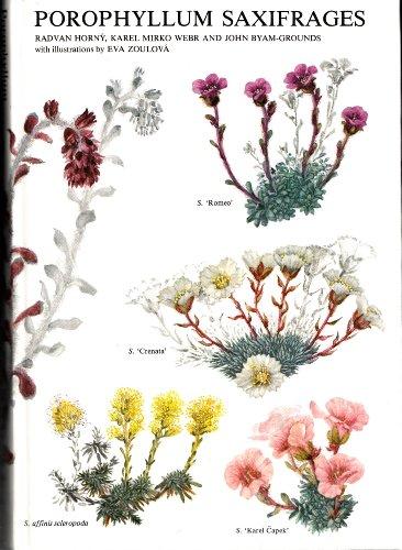 Porophyllum Saxifrages: Horny, Radvan, etc.